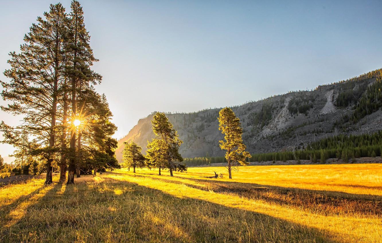 Фото обои поле, осень, свет, горы, дерево, утро