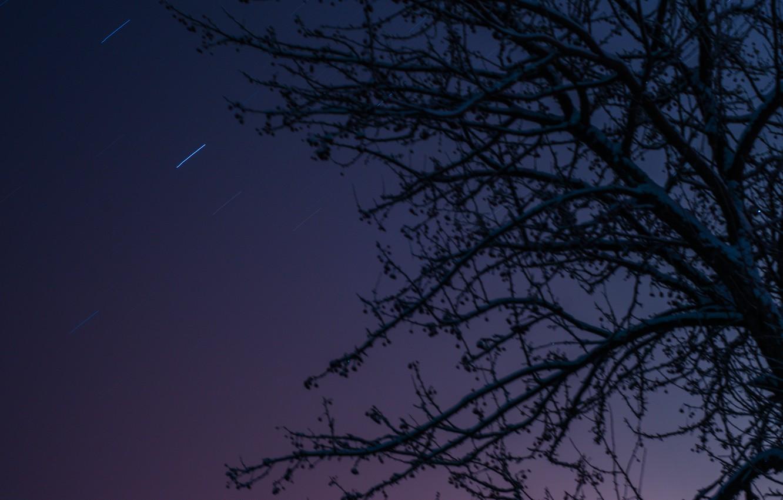 Фото обои небо, звезды, ночь, apple, sky, night, stars, tree