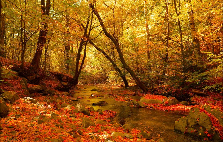 Фото обои Осень, Лес, Ручей, Fall, Autumn, Colors, Forest