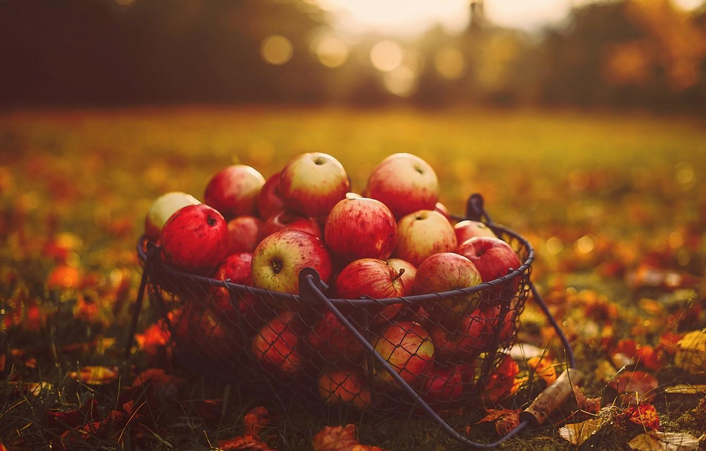Фото обои осень, трава, листья, корзина, яблоки, еда