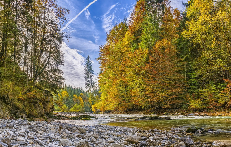 Фото обои лес, река, ручей