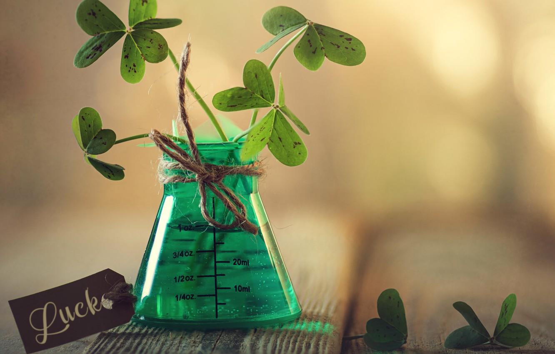 Фото обои листья, макро, доски, клевер, верёвка, боке, бирка, мензурка
