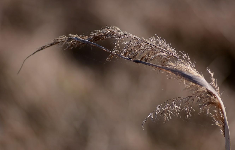 Фото обои трава, макро, природа, весна