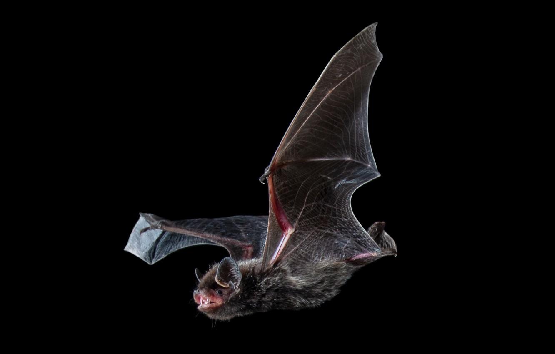 фотообои летучие мыши уверены, что даже