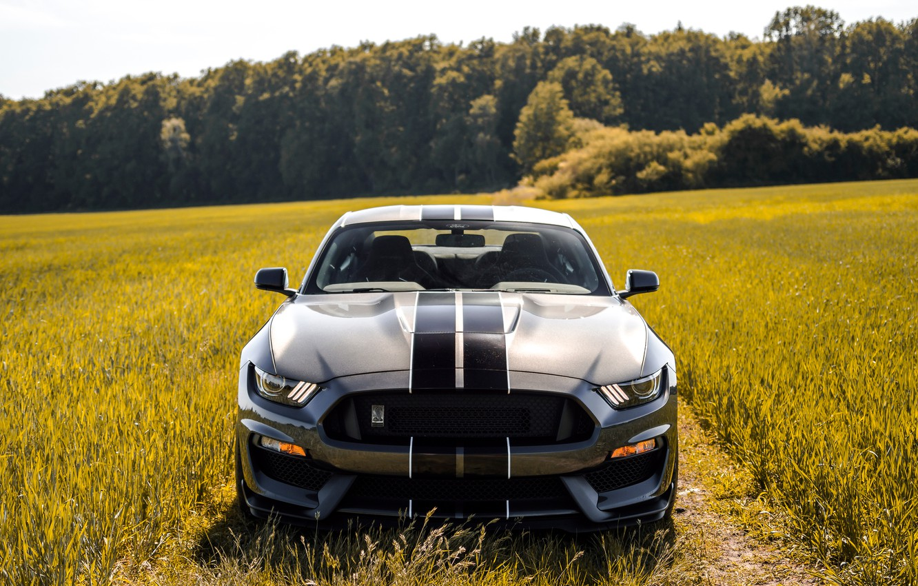 Фото обои Mustang, Ford, Shelby, Форд, Мустанг, GT350, Ford Mustang Shelby GT350