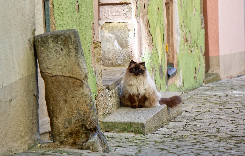 Фото обои кошка, дом, улица