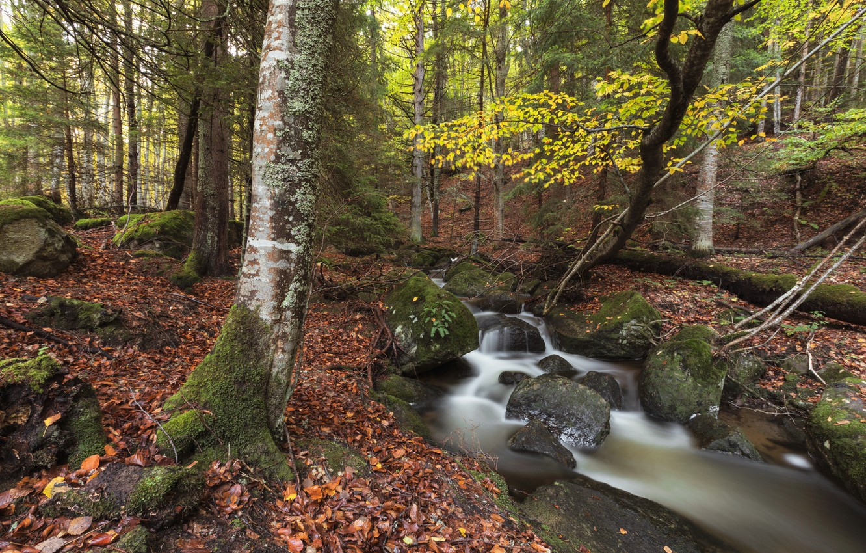 Фото обои осень, лес, природа, ручей, камни