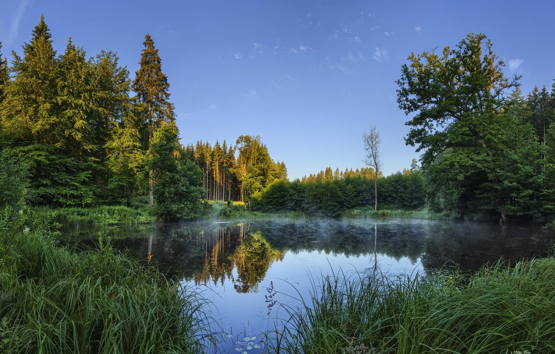 Фото обои лес, лето, озеро