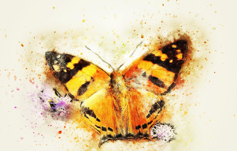 Фото обои макро, фон, бабочка, стилизация под живопись