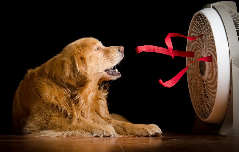 Фото обои дом, собака, вентилятор