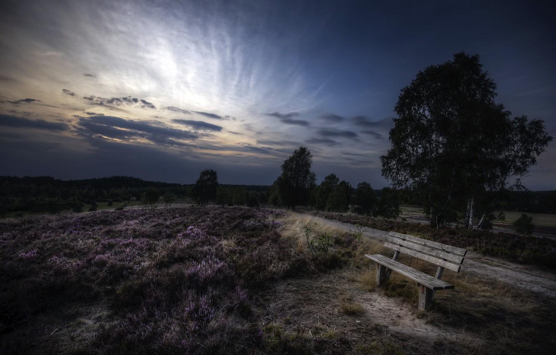 Фото обои лето, вечер, скамья