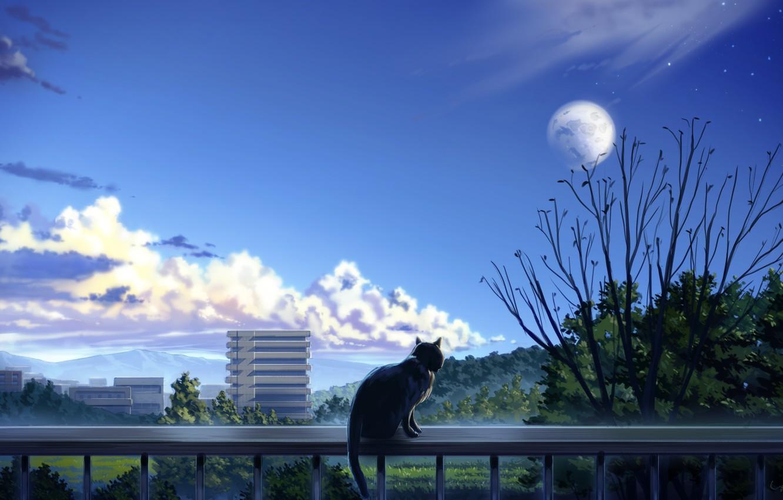 Фото обои кошка, деревья, город, балкон