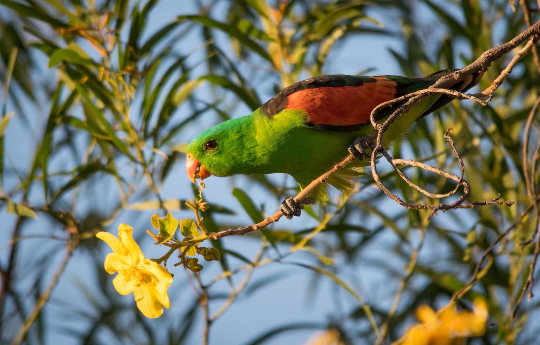 Фото обои цветок, ветки, птица, попугай