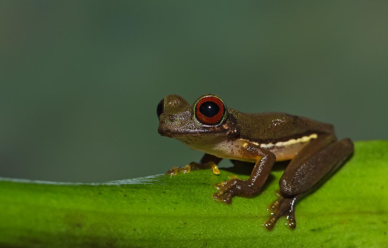 Фото обои frog, stream, bellied