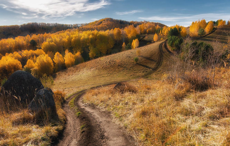Фото обои дорога, осень, лес, горы, путь