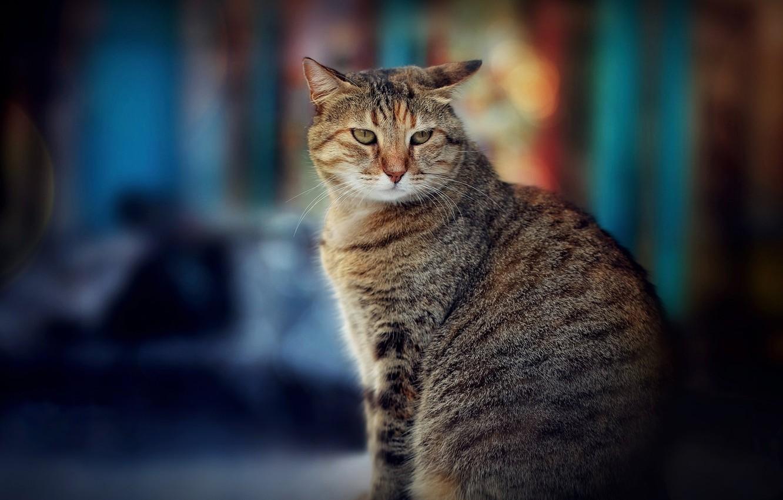 Фото обои кот, боке, котейка