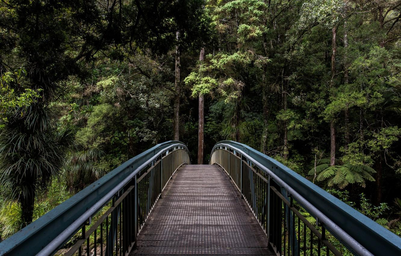Фото обои зелень, лес, лето, деревья, мост, природа