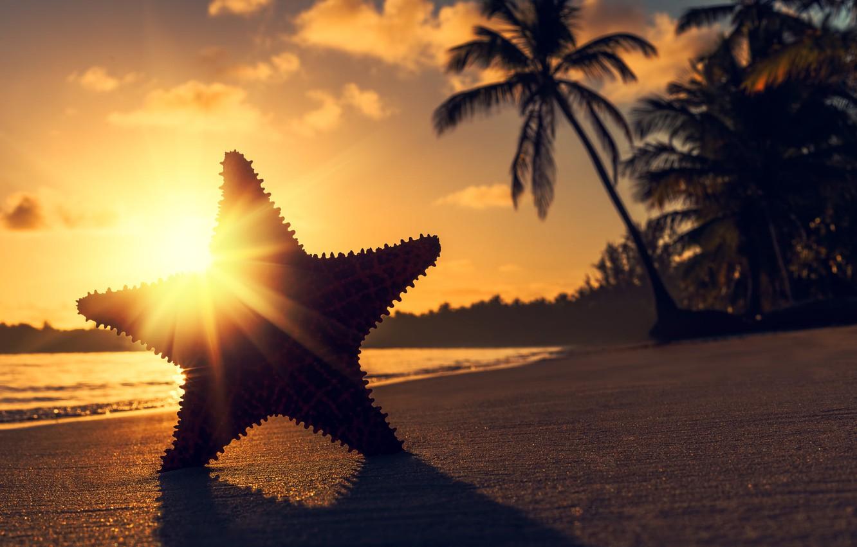 Фото обои солнце, лучи, закат, тропики, пальмы, океан, берег, звезда, тень, вечер, Valentin Valkov