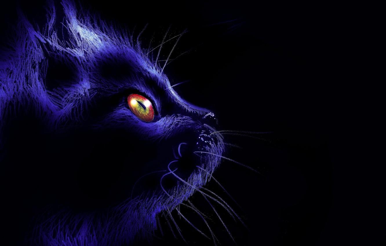 Фото обои кот, усы, взгляд, ночь