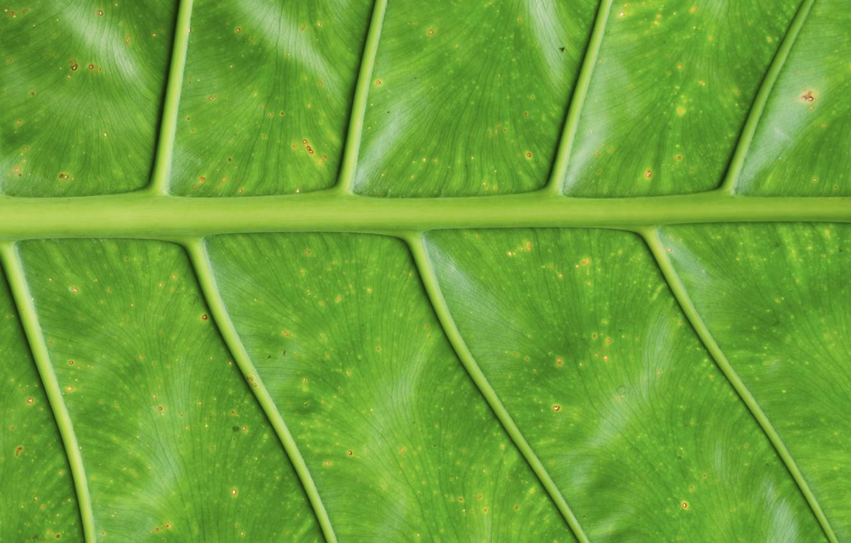 Фото обои макро, лист, зеленый, фон, green, texture, macro, leaf