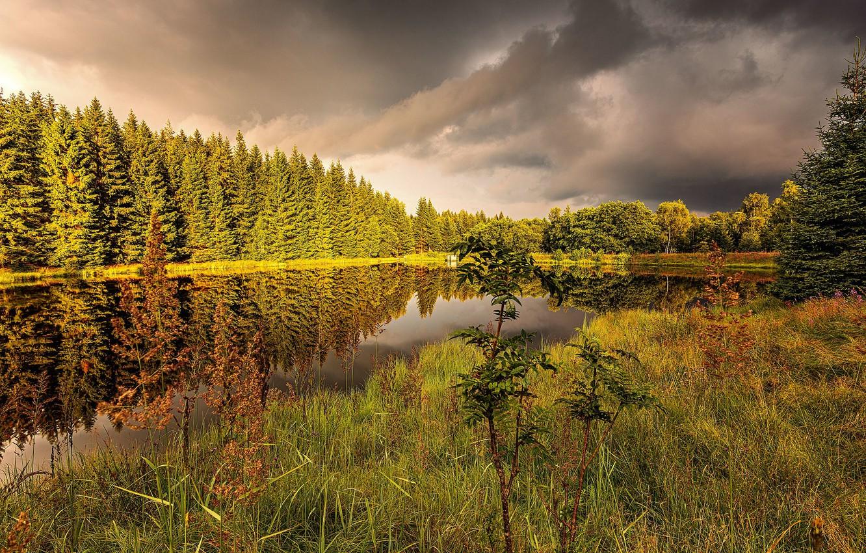 Фото обои трава, природа, озеро