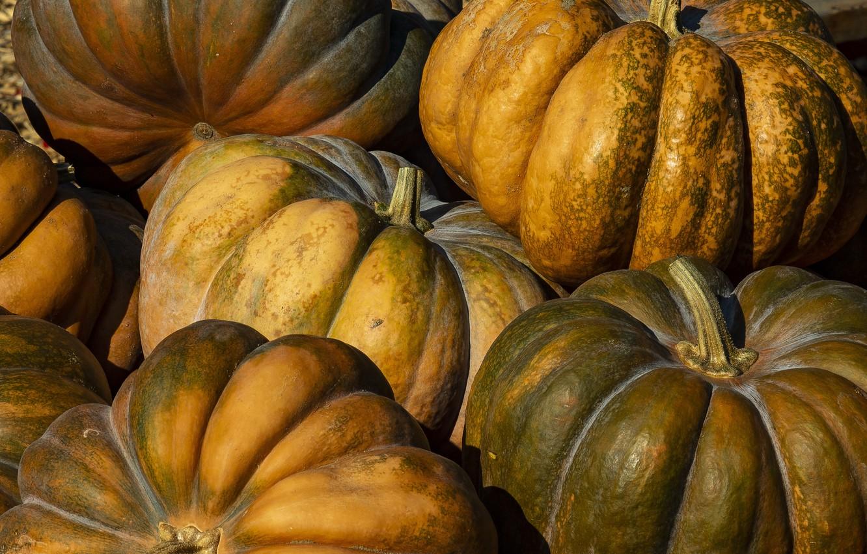 Фото обои Canada, Ontario, Green and Orange Pumpkins, Halton, Springridge Farm