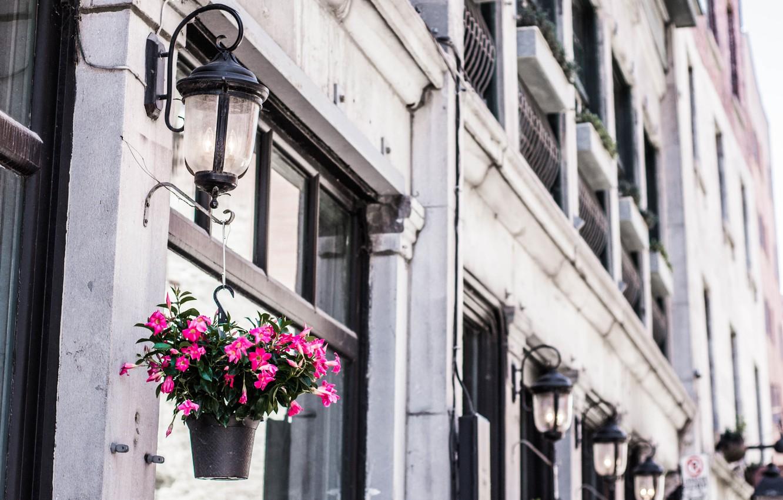 Фото обои flowers, street, bulding