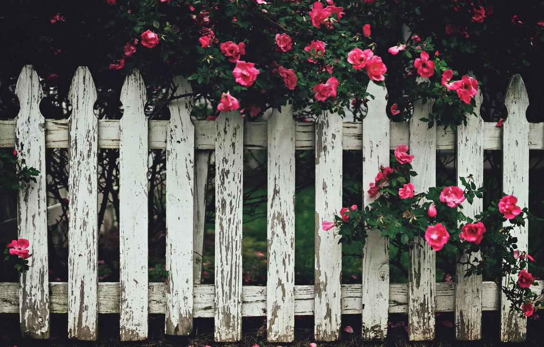Обои забор, улица, цветы. Города foto 6