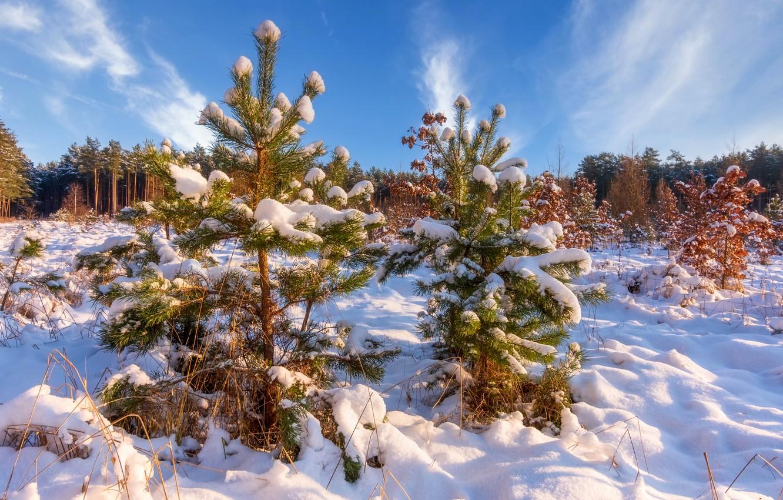 Фото обои зима, лес, снег, природа, ёлочки, деревца