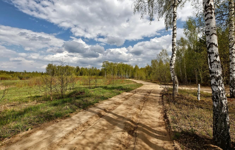 Фото обои дорога, природа, берёза