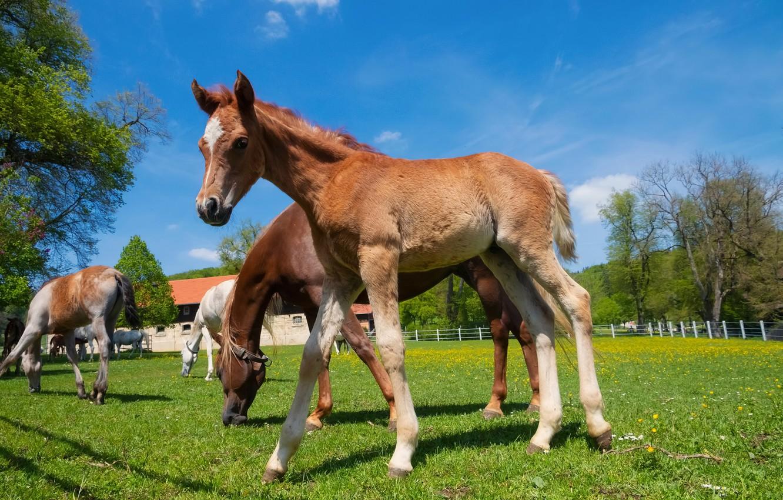 Обои лошадь, жеребёнок. Животные foto 12