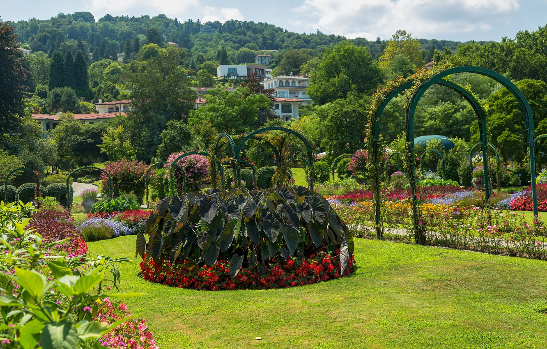 Обои цветы, сша, кусты, ball ground gibbs gardens. Природа foto 14