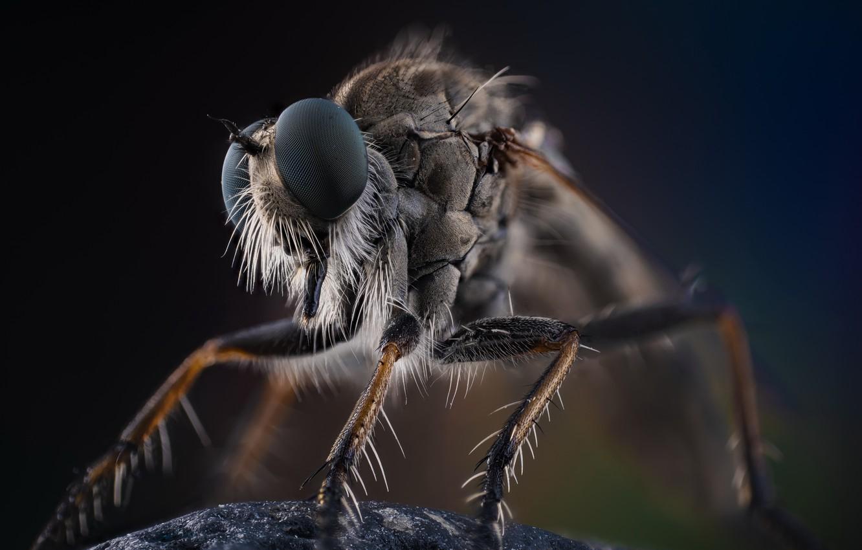 Фото обои макро, природа, насекомое