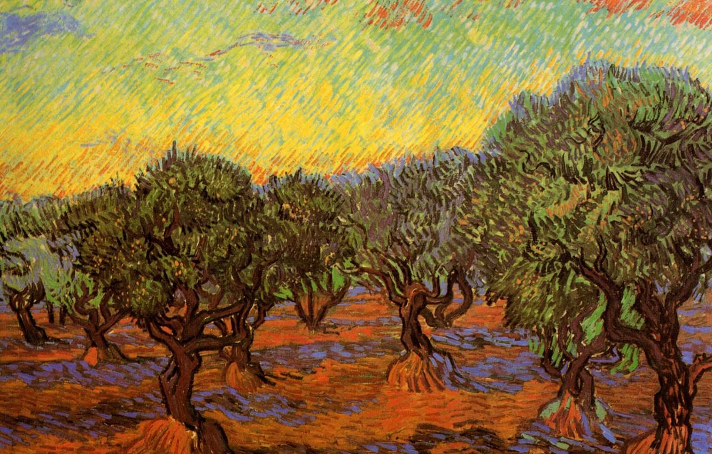 Фото обои деревья, Vincent van Gogh, Orange Sky, Olive Grove