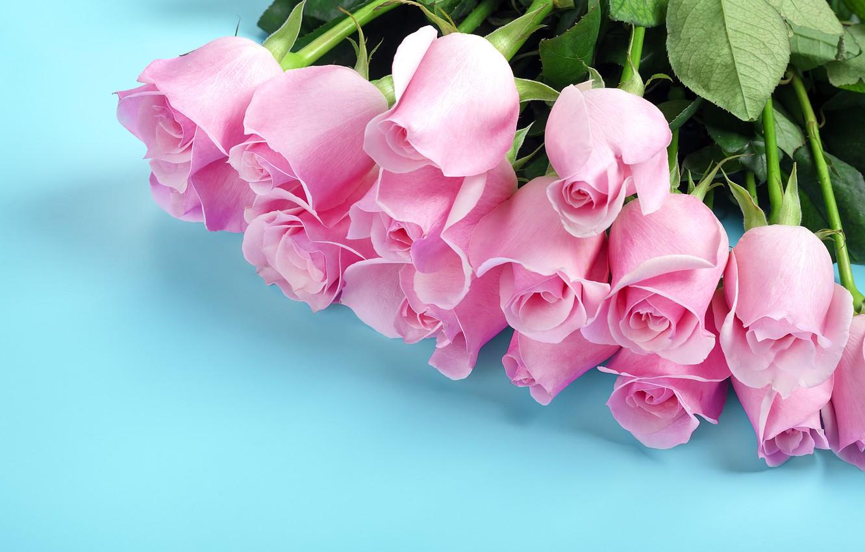 розовые цветы на голубом фоне фото повествует
