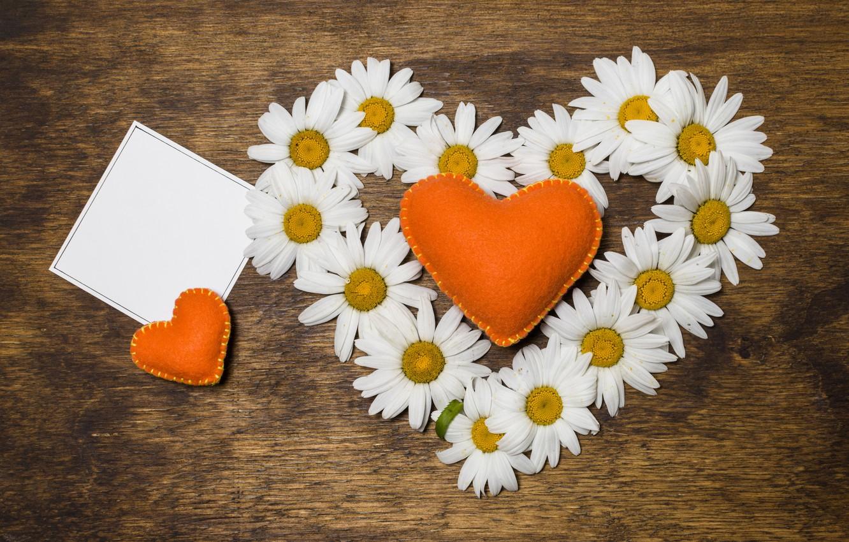 Ромашки цветы любви