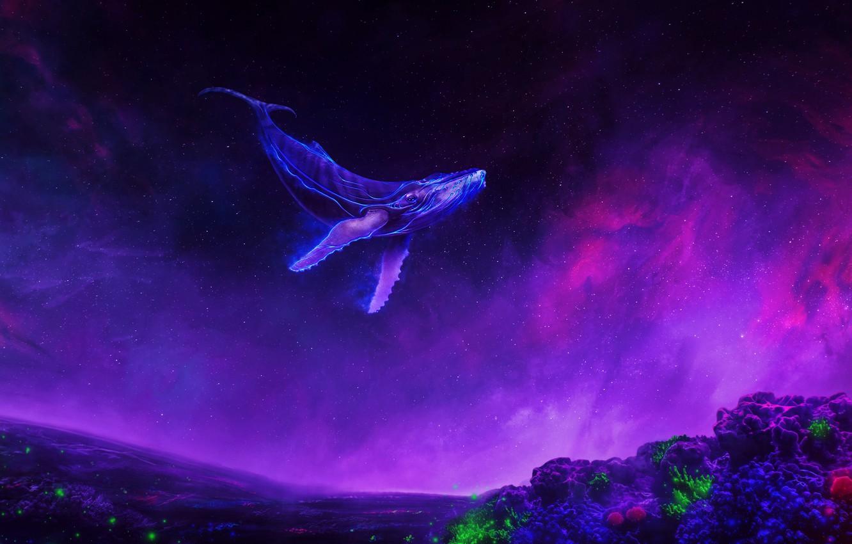 космос и киты картинки на рабочий стол клуб двух