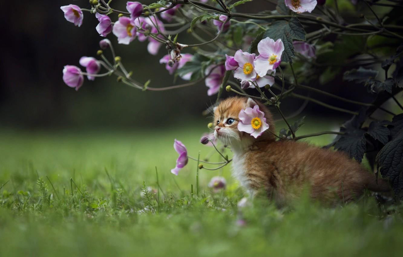 Фото обои трава, цветы, природа, животное, куст, детёныш, котёнок