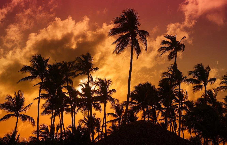 Фото обои тропики, пальмы, вечер