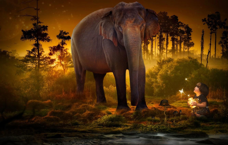 Фото обои деревья, бабочки, слон, ребенок, банка, сумерки