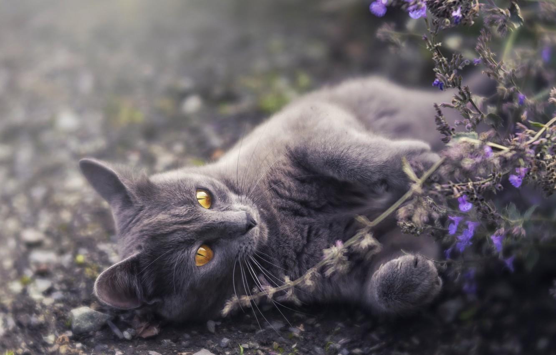 Фото обои кошка, цветы, природа