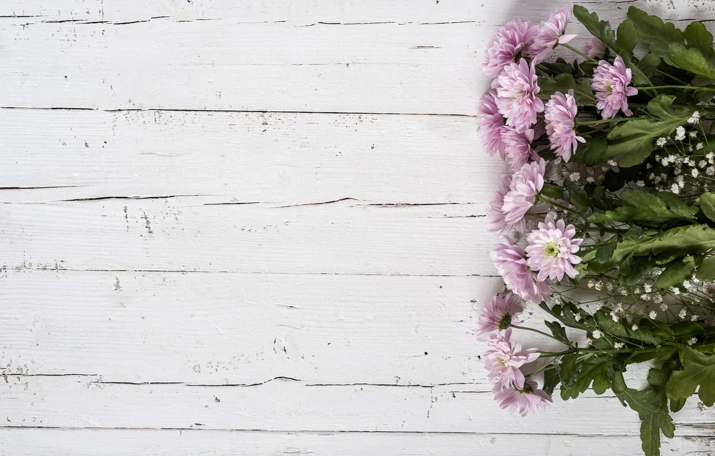 Фото обои цветы, фон, розовые, хризантемы, wood, pink, flowers, violet