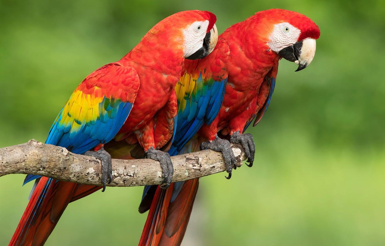 фото птицы попугая многие