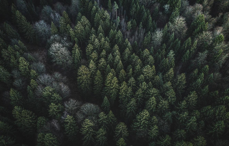 Фото обои лес, деревья, природа, вид сверху
