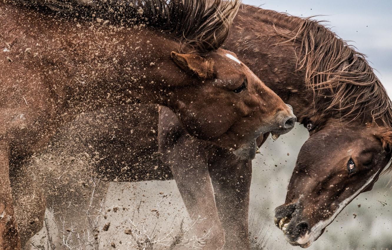 Мустанг Жеребец Пони Холтер Рабочий стол, мустанг, лошадь ... | 850x1332