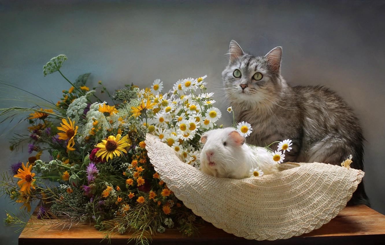 Фото обои кот, цветы, ромашки, букет, шляпа, морская свинка