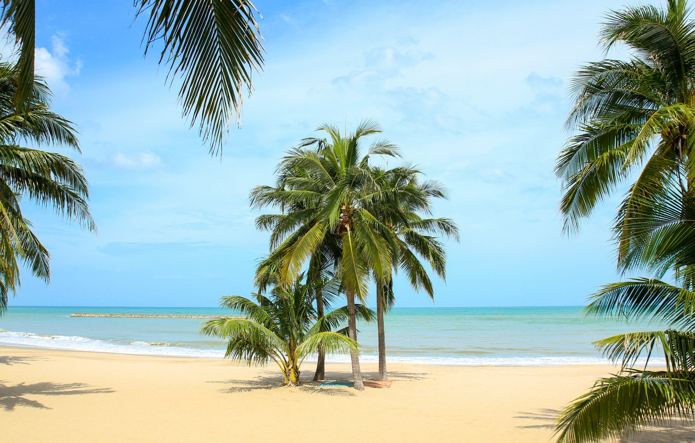 Фото обои песок, море, пляж, лето, небо, солнце, пальмы, берег, summer, beach, sea, seascape, beautiful, sand, paradise, …