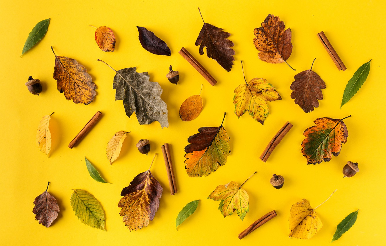 Фото обои осень, листья, фон, colorful, корица, yellow, background, autumn, leaves, осенние