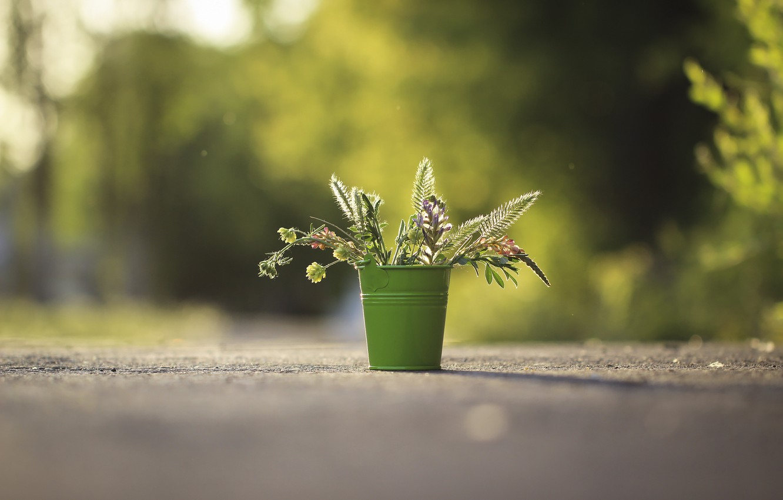 Фото обои цветы, фон, ведерко