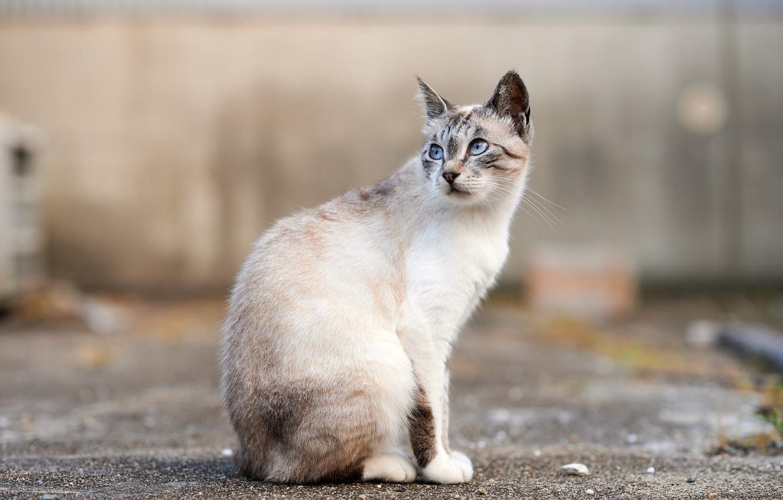 Фото обои кошка, город, улица